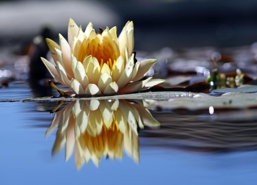 Flower_reflection