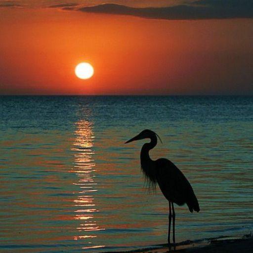 cropped-med-at-sunset1.jpeg
