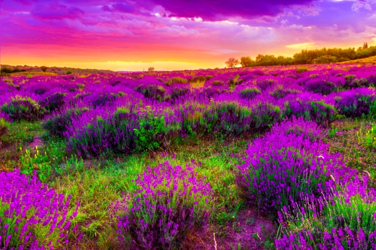 Spring Dusk Desktop Background